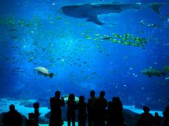 Georgia-Aquarium-Atlanta