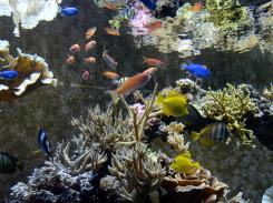 Tropical-Aquarium-at-Seaworld-Orlando